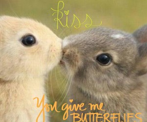 adorable, bunnies, and butterflies image