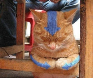 cat, avatar, and funny image
