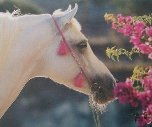 flower, horse, and pur-sang arabe image