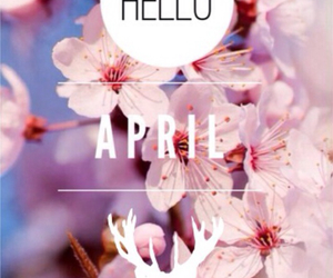 flower, pink, and hello april image