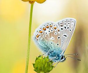 butterfly, flower, and yellow image