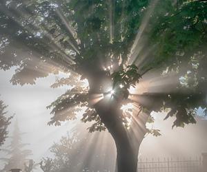 tree, amazing, and beautiful image