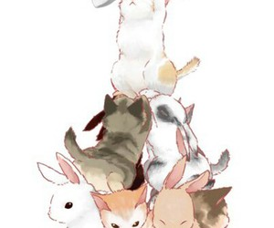 animals, bunny, and cat image