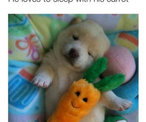 cute, carrot, and puppy image