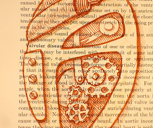 anatomical heart, draw, and illustration image