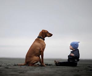 dog, hipster, and vintage image