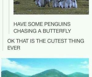 butterfly, free, and penguins image