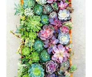 plants, succulent, and flowers image