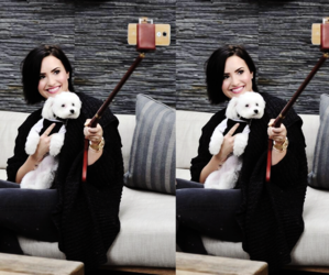 demi lovato, buddy, and dog image
