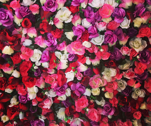 flower wall rose image