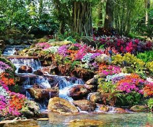 flower, garden, and landscape image