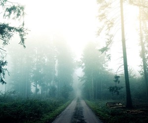background, forest, and trees image