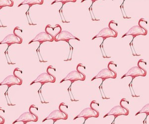 flamingo, pink, and bird image
