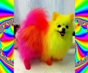 dog, neon, and puppy image