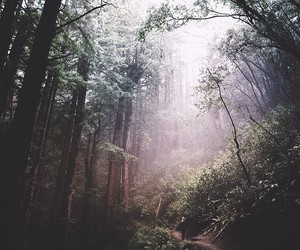 forest, background, and beautiful image