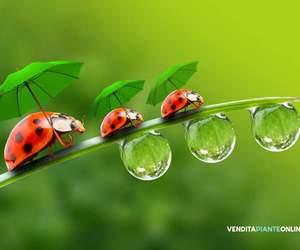 green, red, and umbrella image