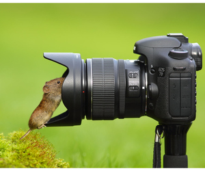 cute animals, mouse, and rodent image