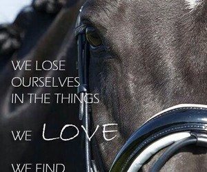 horses, equitation, and horse quotes image
