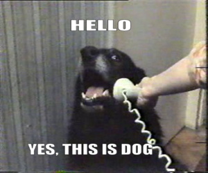 dog, funny, and phone image