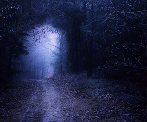 dark forest, dim light, and forest image