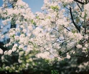 blossom and flowers image