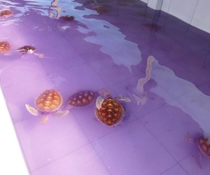 animals, header, and turtles image
