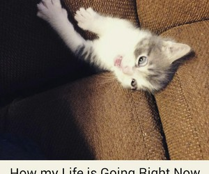 cats, funny, and life image
