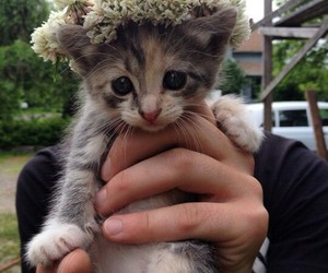 cat, flowers, and princes image