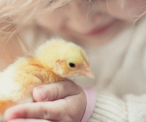 animal, Chick, and lovely image