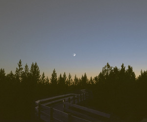 moon and forest image