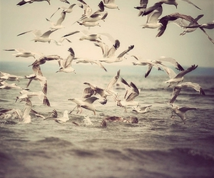 bird, photography, and sea image