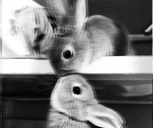 bunny, cute, and little rabbit image