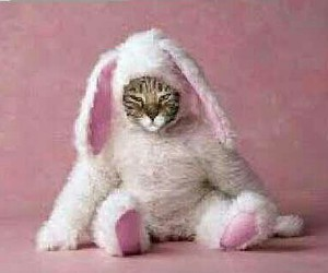 cat, bunny, and funny image