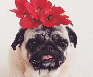 dog, pug, and flowers image