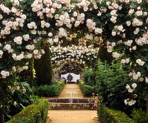 garden, relax, and rose image