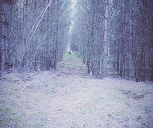 forest, wald, and traurig image