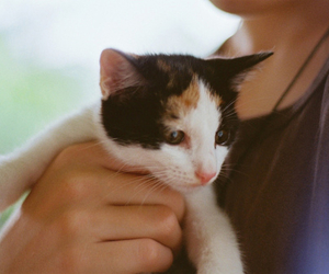 cute, cat, and girl image