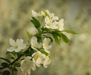 floral, nature, and spring image