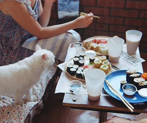 cat, girl, and sushi image