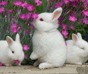 adorable, bunnies, and easter image