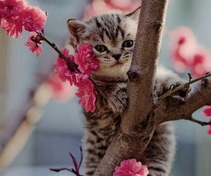 cat, kitten, and flowers image
