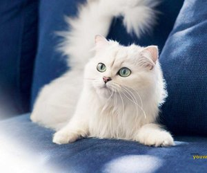 cat, white, and kitten image