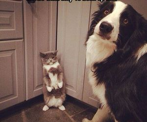 dog and cat, cute, and chien et chat image