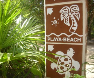 beach and tropical image