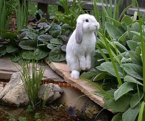 lapin and cute image