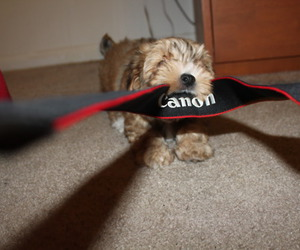 canon, dog, and cute image