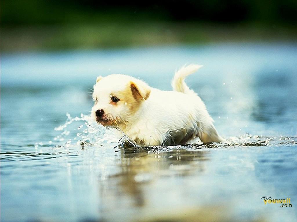 Youwall Cute Dog Wallpaper Wallpaperwallpapersfree