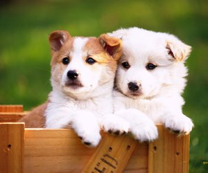 dogs and animal image