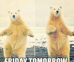 friday, tomorrow, and funny image