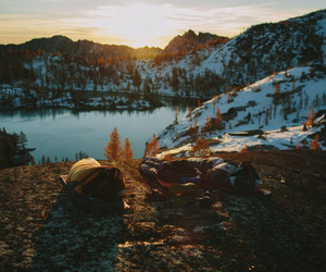 explore, forest, and travel image